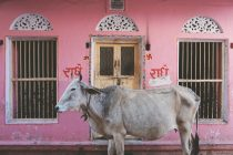 Northern India: Photo Diary